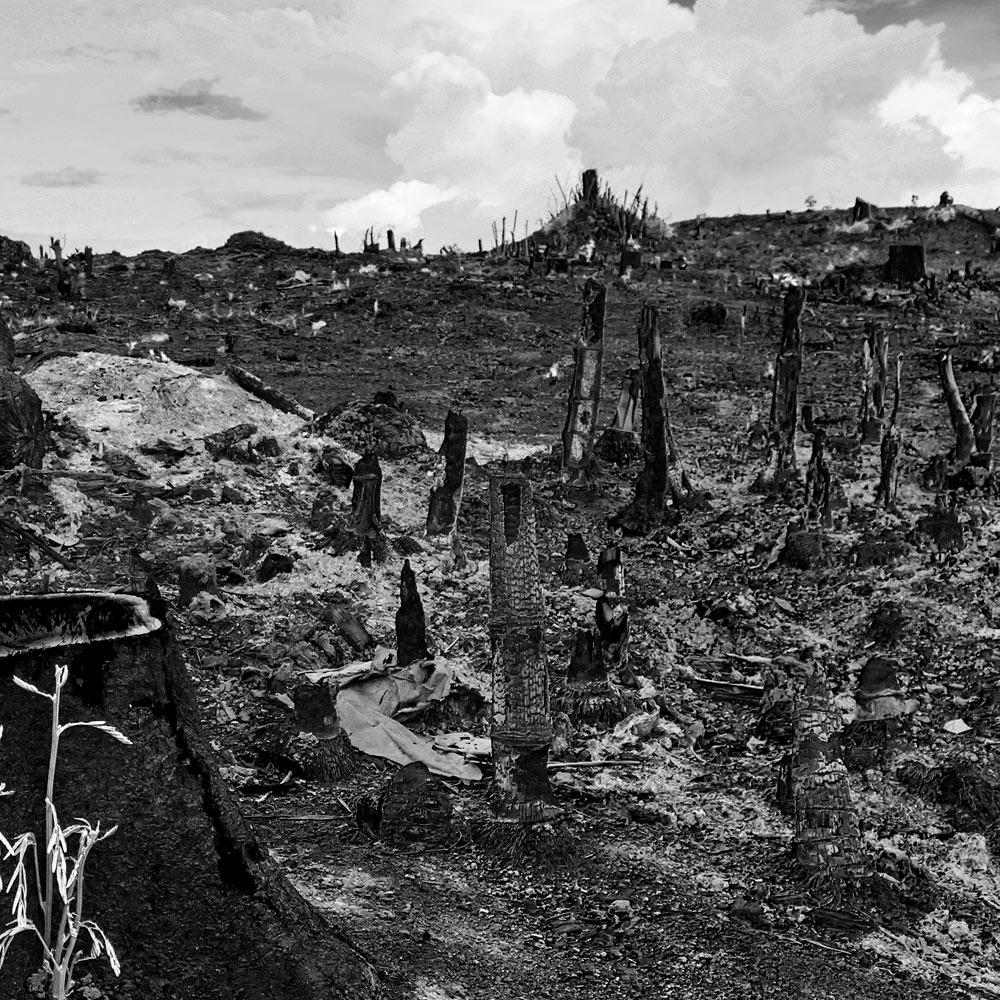 Wir unterstützen den Klima-Streik, um katastrophale Veränderungen der Ökosysteme unserer Erde zu verhindern.