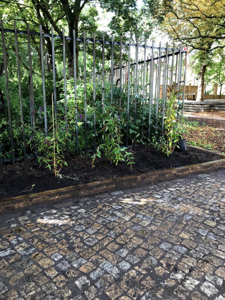 Flieder im neuen Hofgarten
