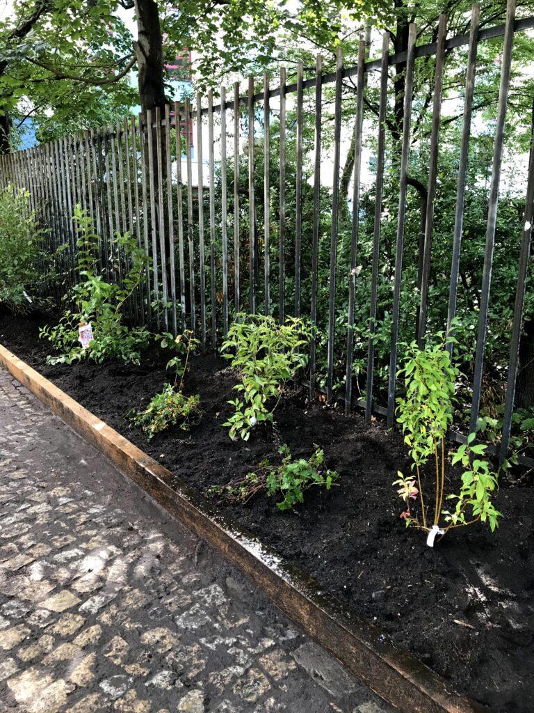Heidelbeere, Storchenschnabel, Holunder im neuen Hofgarten