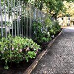 Schneebeere, Hibiscus und andere Pflanzen im neuen Hofgarten